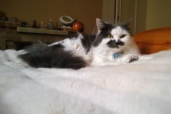 Gray and white cat sitting on bed