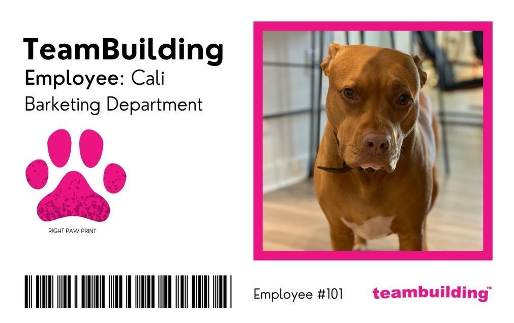 Pet ID Badge With a Dog that Says Barketing Department